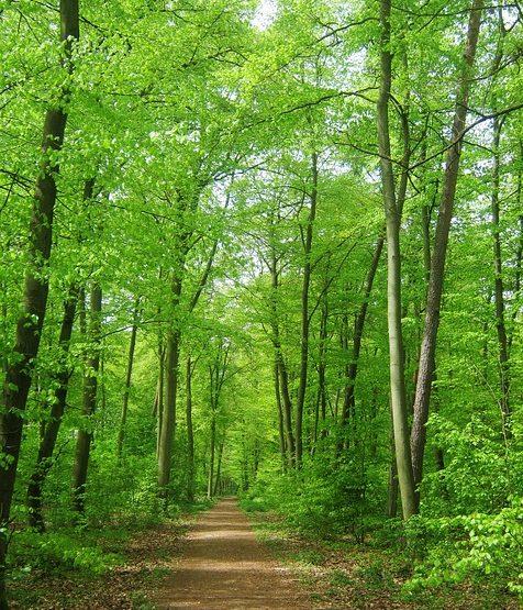 """Résultat de recherche d'images pour """"sentier forêt"""""""""""